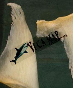 Vi cá mập khô 1 vây 100g