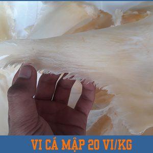 Vi cá mập nguyên vây đuôi 18-20 vi/kg ( Loại nhỏ )