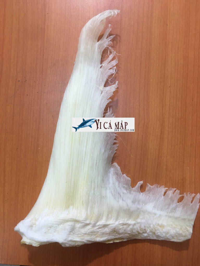 Vi cá mập - Vi đuôi cá mập nha trang cao cấp